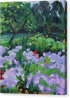 Louisiana Wild Phlox Canvas Print by Barbara Jones