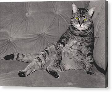 Lounge Cat Canvas Print by Joy McKenzie
