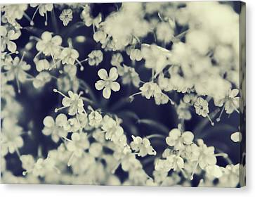 Love And Lace Canvas Print by Laurie Search