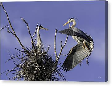 Great Blue Heron Canvas Print - Love At First Sight by Everet Regal