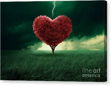 Love At First Sight Canvas Print by Giordano Aita