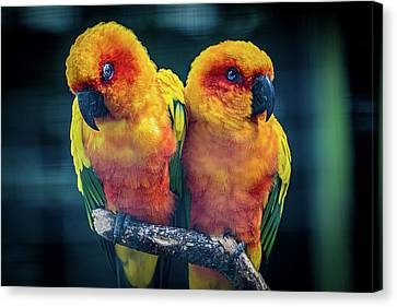 Canvas Print featuring the photograph Love Birds by Chris Lord