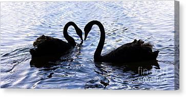 Love Birds On Swan Lake Canvas Print