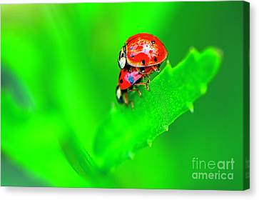 Canvas Print featuring the photograph Love Bugs by Sharon Talson