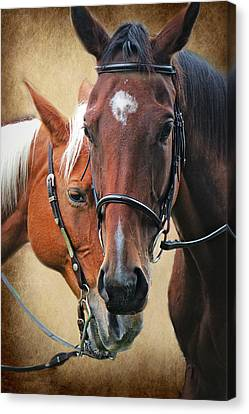 Love Horses Canvas Print by Lorella  Schoales