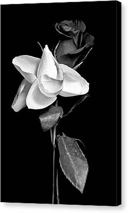 Canvas Print featuring the photograph Love In Bloom by Elsa Marie Santoro