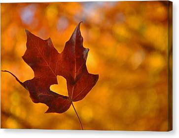 Love In Fall  Canvas Print by Brittany H