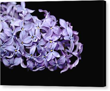 Love In Lilac Canvas Print by Debbie Oppermann