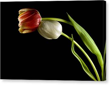 Canvas Print featuring the photograph Love In Spring by Elsa Marie Santoro