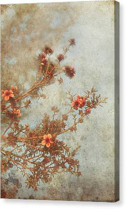 Love Is In Bloom Canvas Print by Laurie Search