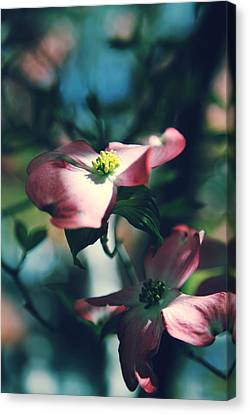 Dogwood Canvas Print - Love Is Such A Beautiful Thing by Laurie Search