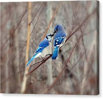 Bluejay Canvas Print - Love Me Tender by Karen Cook