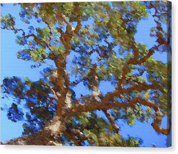 Lovely As A Tree Canvas Print by Donna Blackhall