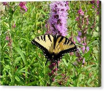 Lovely Butterfly Canvas Print