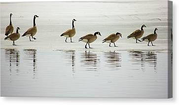 Lovely Day For A Stroll Canvas Print
