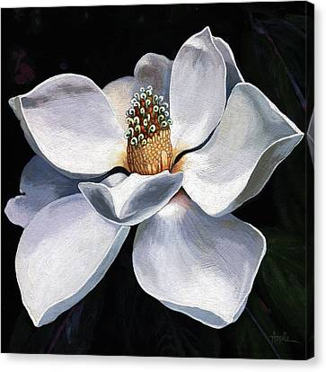 Lovely In White - Painting Magnolia Flower  Canvas Print