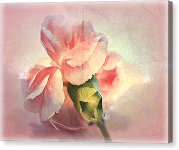 Pink Carnation Canvas Print - Lovely by Kathy Bucari