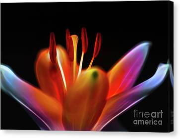 Lovely Lily Canvas Print by Judi Bagwell