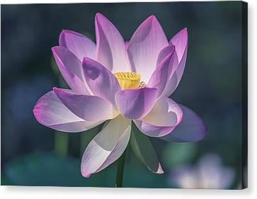 Lovely Lotus Canvas Print