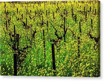 Lovely Mustard Grass Canvas Print