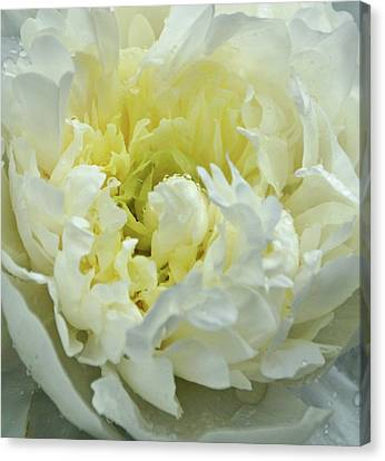 Canvas Print featuring the photograph Lovely Peony by Sandy Keeton