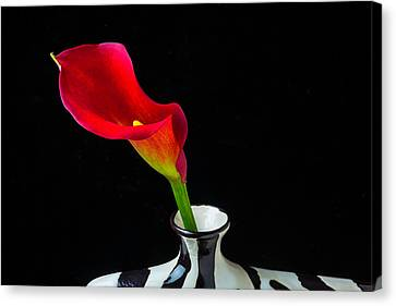 Lovely Red Calla Lily Canvas Print by Garry Gay