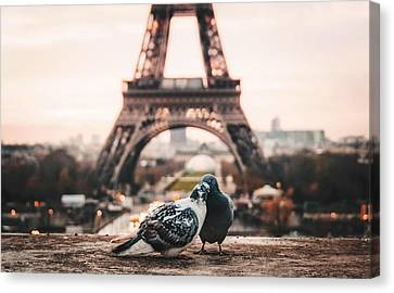 Lover Doves In Paris Canvas Print by Fbmovercrafts