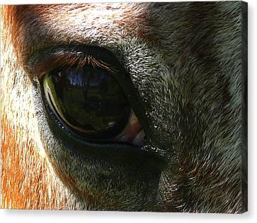 Loving Eye Canvas Print