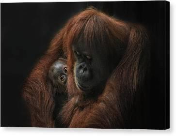 Orangutan Canvas Print - loving her Baby by Joachim G Pinkawa