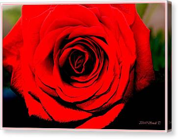 Loving Red Canvas Print