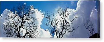 Low Angle View Of Trees Against Cloudy Canvas Print