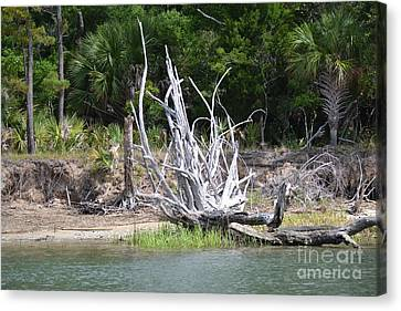 Canvas Print featuring the photograph Low Country Driftwood by Carol  Bradley
