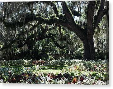 Canvas Print featuring the photograph Low Country Series I by Suzanne Gaff