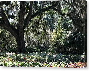Canvas Print featuring the photograph Low Country Series II by Suzanne Gaff