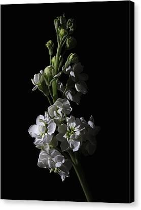 Low Key Flowers Canvas Print