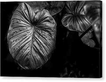 Low Key Nature Background, Textured Plants, Leaves For Decorativ Canvas Print