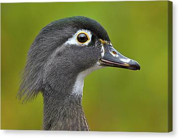 Canvas Print featuring the photograph Low Key by Tony Beck