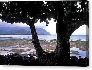 Low Tide And The Tree Canvas Print by Kathy Yates