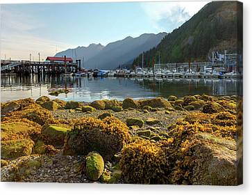 Low Tide At Horseshoe Bay Canada Canvas Print by David Gn
