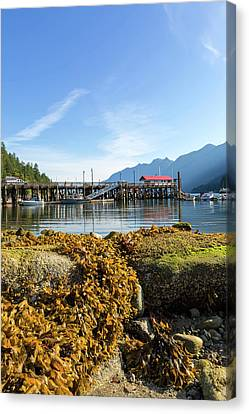 Low Tide At Horseshoe Bay Canada On A Sunny Day Canvas Print by David Gn