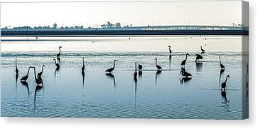 Low Tide Gathering Canvas Print by Steven Sparks
