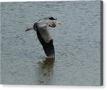 Canvas Print featuring the photograph Low Wing by Kathleen Stephens
