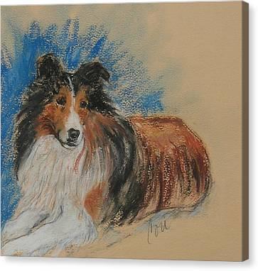 Shetland Sheepdog Canvas Print - Loyal Companion by Cori Solomon