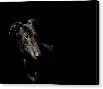 Greyhound Canvas Print - Loyality by Paul Neville