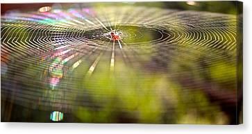 Lp Web Canvas Print