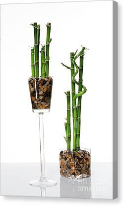 Bamboo House Canvas Print - Lucky Bamboo by Eran Turgeman