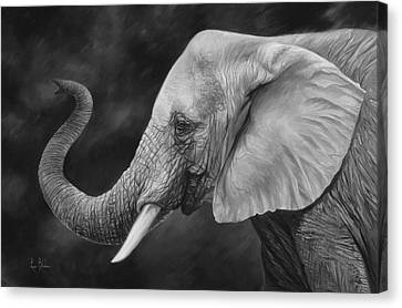 Elephants Canvas Print - Lucky - Black And White by Lucie Bilodeau