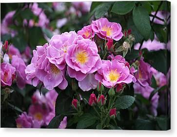 Floral Arrangement Canvas Print - Lucky Floribunda Roses by Rona Black