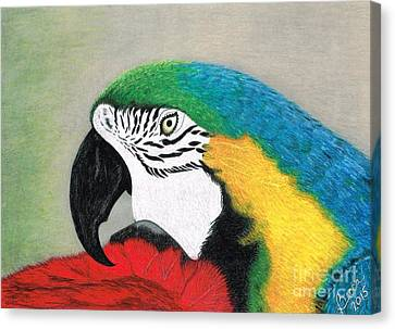 Macaw Canvas Print - Lucky Mac by Becca Miller