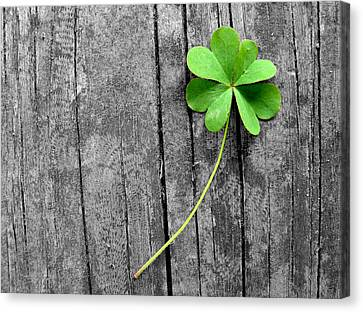 Lucky Canvas Print by Shannon Blanchard